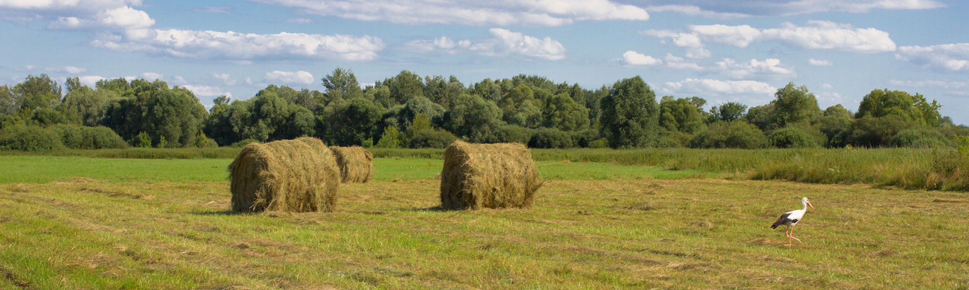 Fresh Cut Hay Bales
